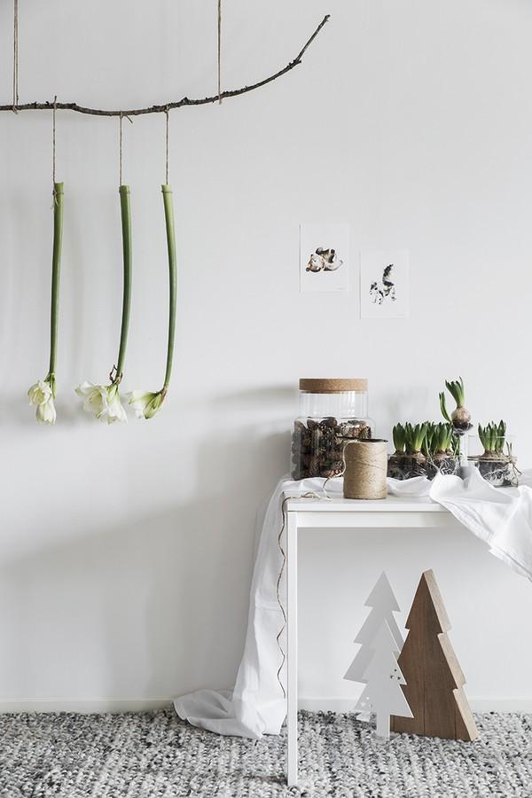 jullökar, julinredning, jultips, hänga amaryllisar upp och ned
