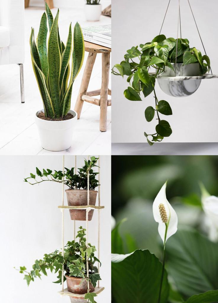 7 luftrenande växter