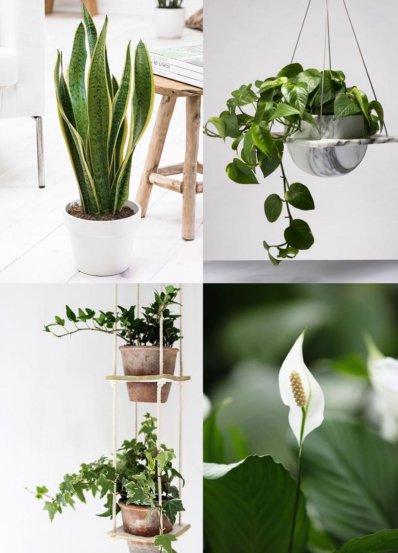 bilder på växter